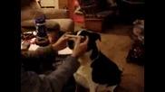 Говорящо Куче
