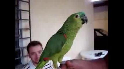 Много забавен папагал