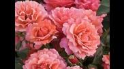 Valsul Florilor