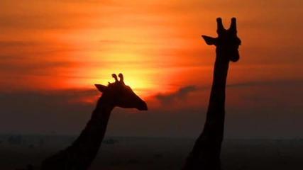 * Африка *