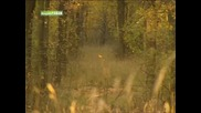 Лов на Прасета - 1