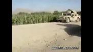 Войници намират нива засята с марихуана