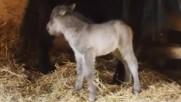 Пони се роди в зоопарка във Варна