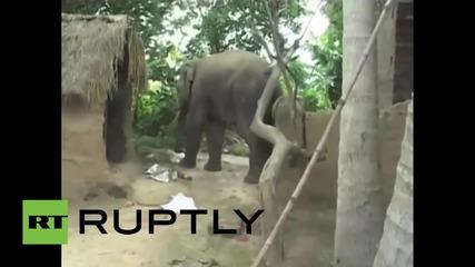 Разярен слон нападна индийско село