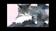 до сега - Куче , Котка и Мишка на едно място - най добри приятели - смях