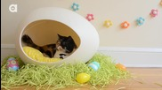 Happy Easter from Pudge the Cat