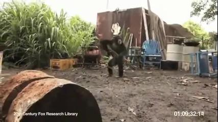 Маймуна стреля с калашник - Луд Смях