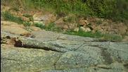 Разходка До Залива На Крокодилите
