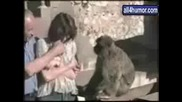 Луди животни смях
