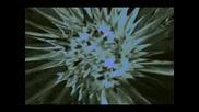 Enigma Deep Forest - Marakesh