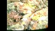 Ловни Мигове