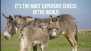 9 от най-скъпите храни в света