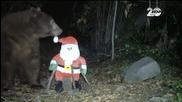 Мечка нападна Дядо Коледа