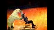 Цирк - Бели Мечки С Кънки