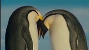 Превод / Любовта на пингвина