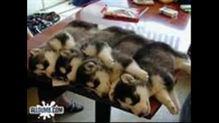 Puppy Love - Сладки Кученца