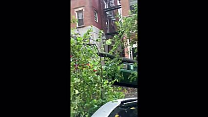 USA: Trees knocked down in Boston after storm hits East Coast