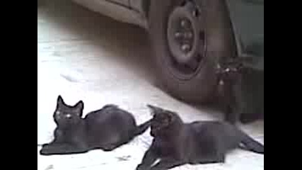 Смешни котки :d