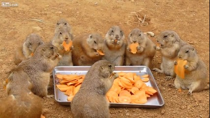 Парти по животински!