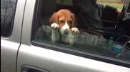 Много замислено кученце!