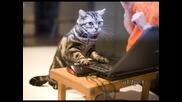 Котка и компютър - Детска песничка