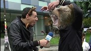 Мечки избягаха от зоопарка в Благоевград - Лудия репортер 23.10.2015