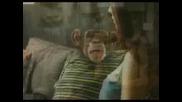 Маймуна в реклама на Bud Light