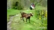 Пародия на песни...с кози /много смях/