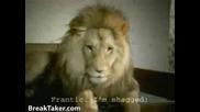 Сем.лъвови (изневяра)!!!