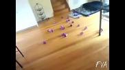 Брей котките мразeли лазери... С М Я Х