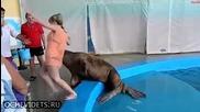 Момиче получава внезапен шамар от морж, смях