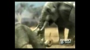 Animal Face - Off - Elephant Vs Rhyno