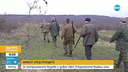 СРЕД ПТИЦИТЕ: За застрашените видове и дивия свят в Бургаските влажни зони