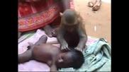 Удивително! Маймунка - Детегледач!
