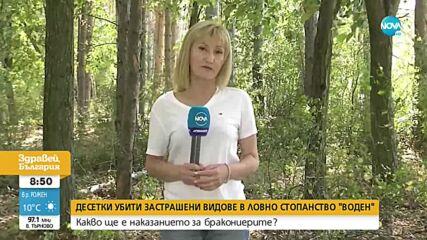 Откриха отстреляни два благородни елена, препарирани и замразени птици при акция в Разградско