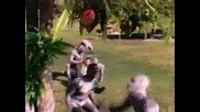 Mighty Morphin Power Rangers - 1x52