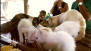 Сладка маймунка и котки си хапват чипс.