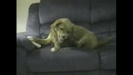 Куче пази кокала си - Смях
