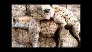 Картинки на лупкащи се животни