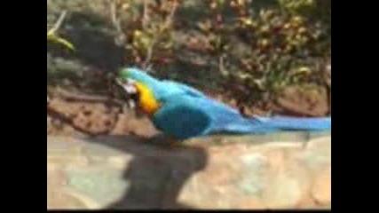 Смешен Папагал