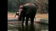 Салон за красота на слонове