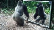 Животни се гледат в огледалo! Ето и техните смешни реакции