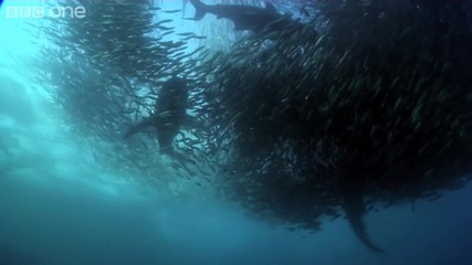 Bbc Подводен Армагедон Hd 1080p