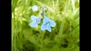 Цветята Обичат Музиката - Султонали Рахматов