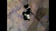 Котенца (: