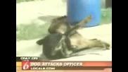 Полицай Прострелва Куче При Самозащита