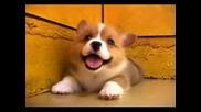 Едно Малко И Сладко Кученце