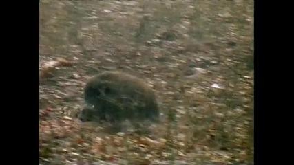 Reivaxfilms Trailer Batidas de Jabali en Pre - Pirineo