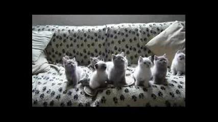 Невероятнo Сладки Танцуващи Котета!
