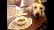 Рожден Ден На Бъди